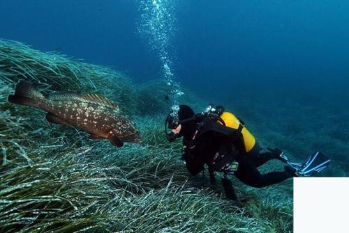 incentive mer et plongée sous marine