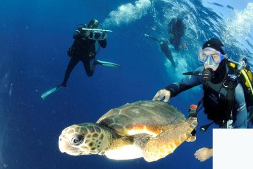 plongée insolite en méditerranée pour entreprise