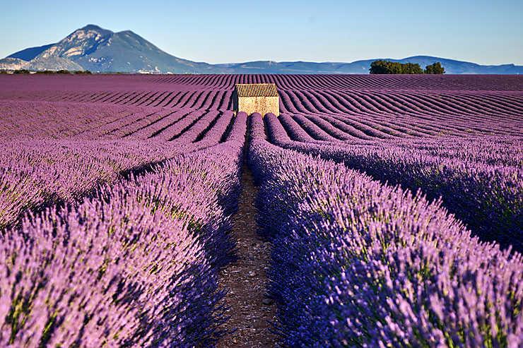 incentive Provence lavandes