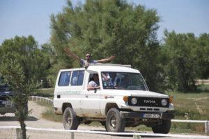 safari-jeep-4x4-camargue