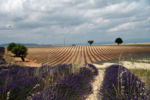 paysage-provence-vtt-entreprise