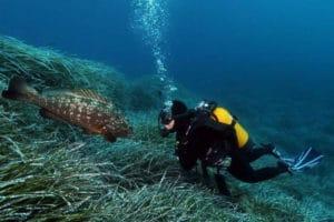 plongee-mediterrannee
