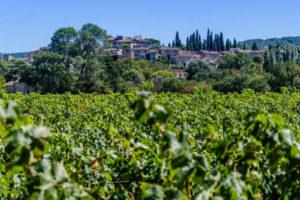 vignobles-provence-verte
